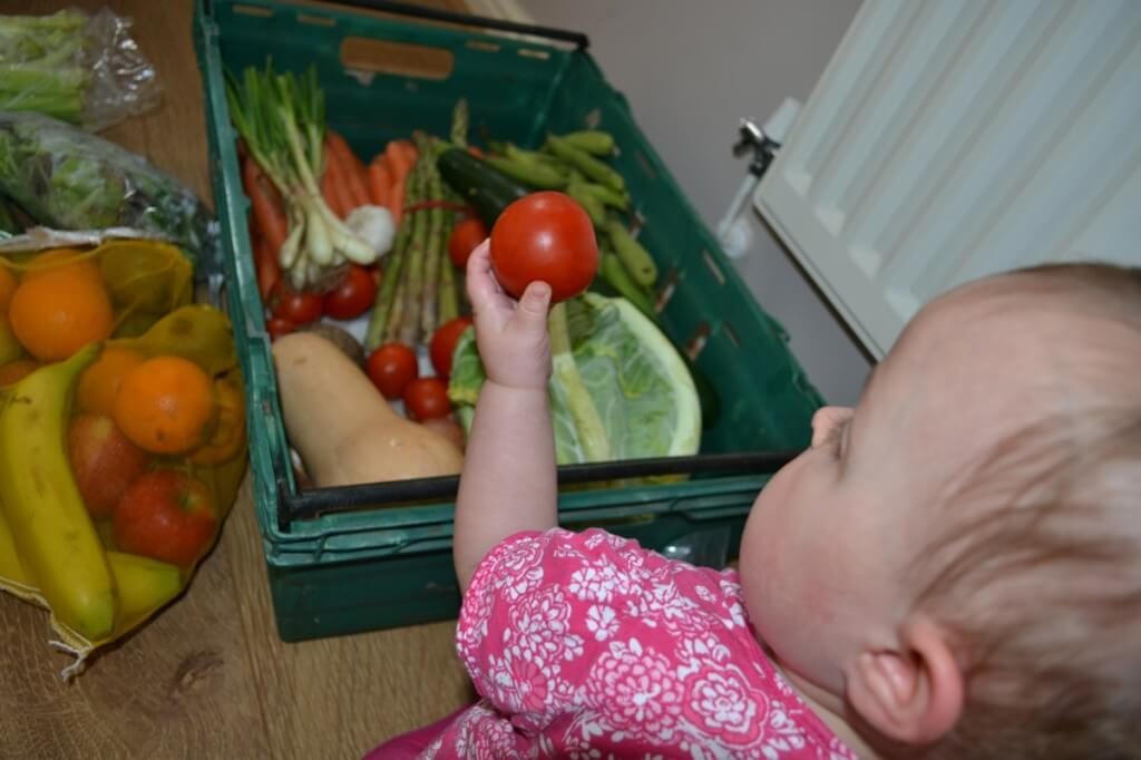 Baby taking tomato from organic vegetable farm box