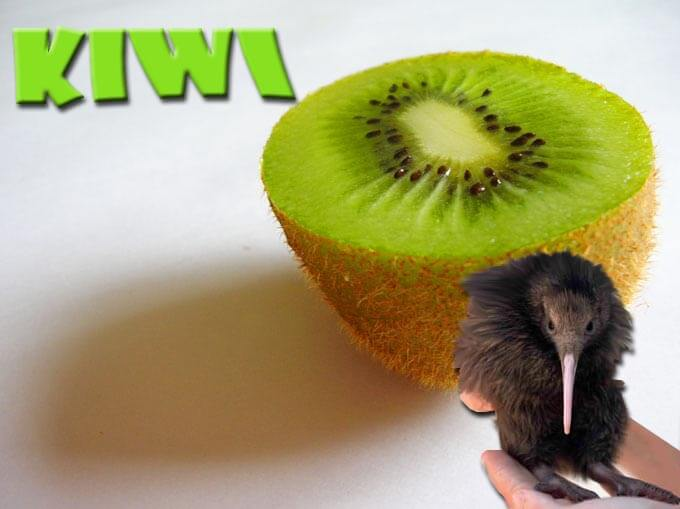 Kiwi bird and kiwifruit: I am obsessed with anything starting with the word kiwi