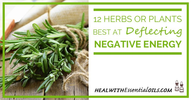 12 herbs or plants best at deflecting negative energy Cleansing bad energy from home