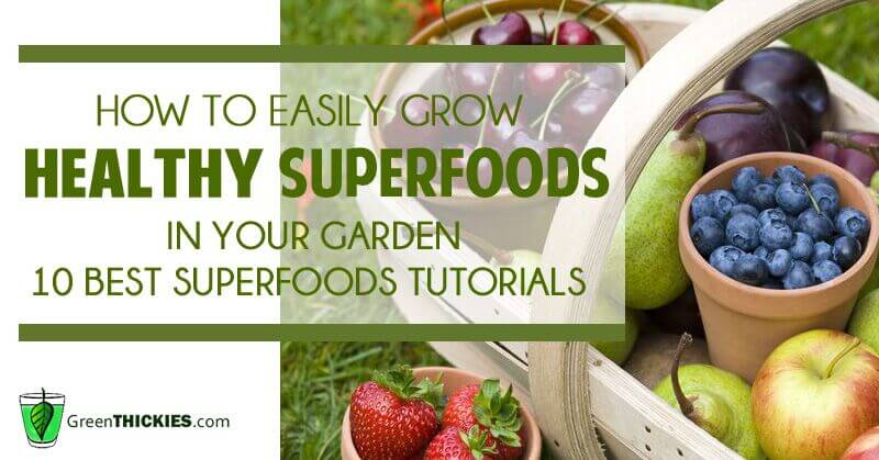 How to easily grow healthy superfoods in your garden