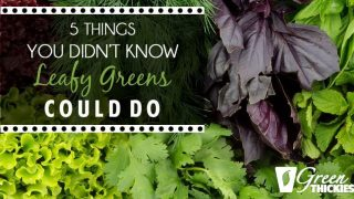 5 Things You Didn't Know Leafy Greens Could Do