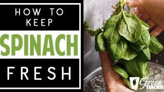 How To Store Spinach To Keep It Fresh - 5 Genius Hacks