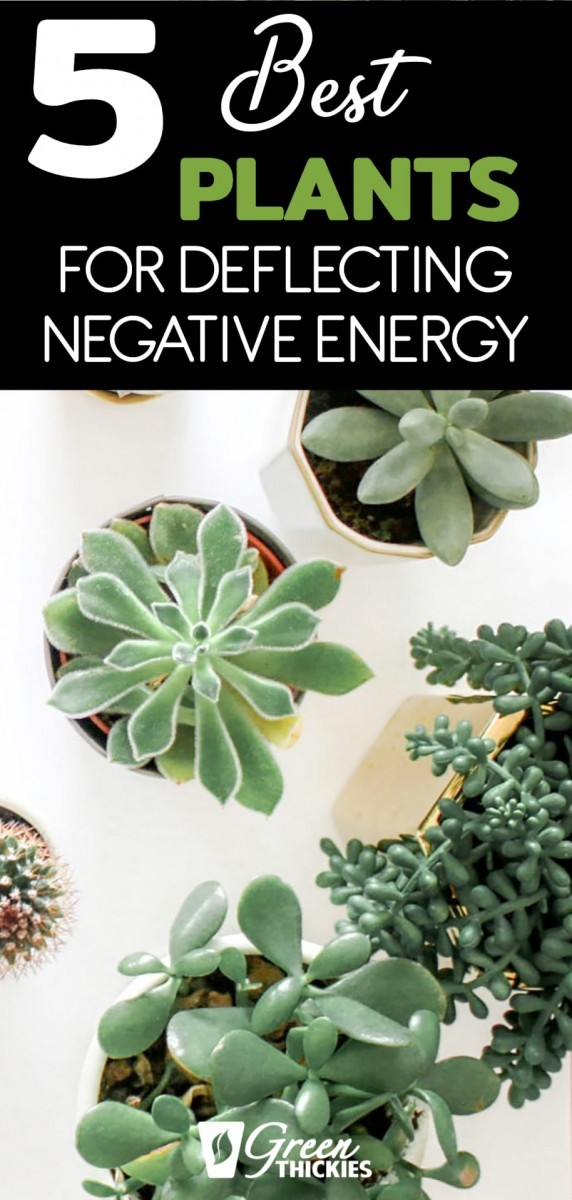 5 Best herbs and plants for deflecting negative energy