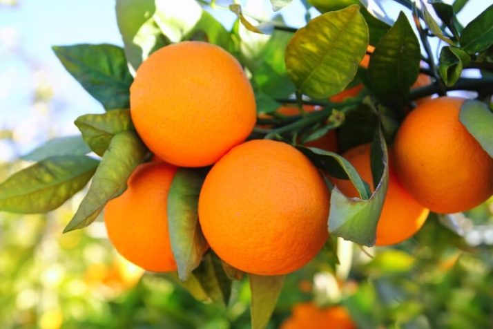 21 Lowest Calorie Fruits For Weight Loss List; Oranges