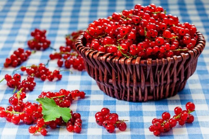 21 Lowest Calorie Fruits For Weight Loss List; Redcurrant