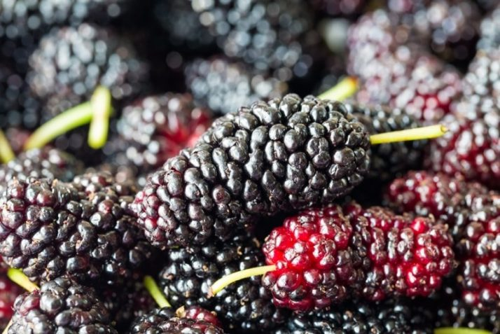21 Lowest Calorie Fruits For Weight Loss List; fresh mulberry fruit