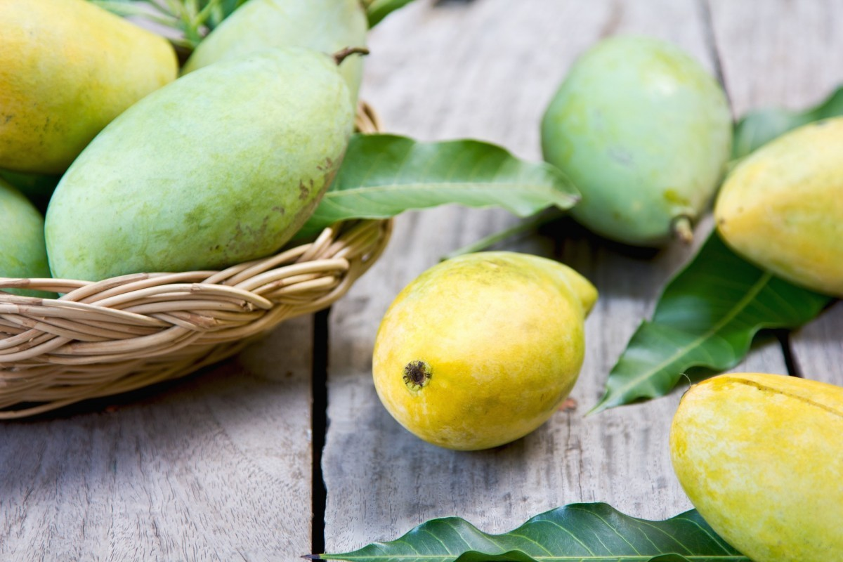 How To Ripen A Mango Faster (Or More Slowly); Mango