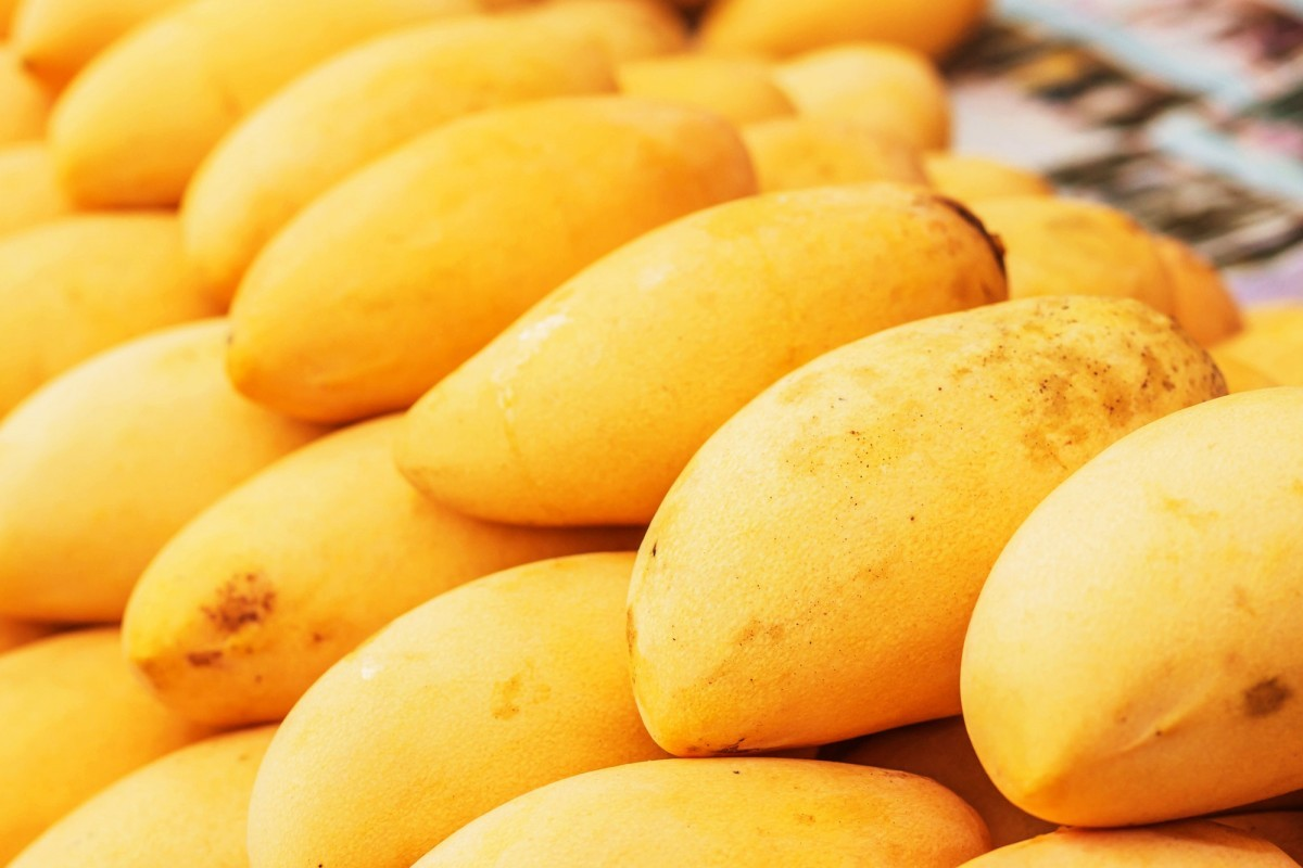 How To Ripen A Mango Faster (Or More Slowly); Ripe mangoes placed in a row