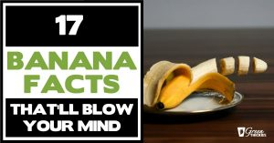 17 Banana Facts That'l17 Banana Facts That'll Blow Your Mindl Blow Your Mind